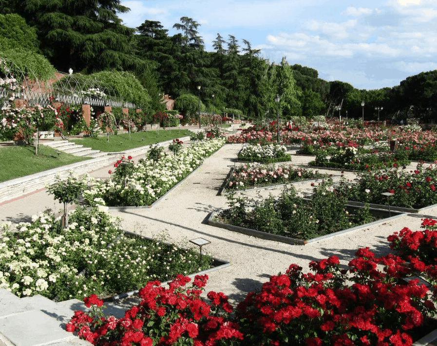 Rosaleda del parque del Oeste - Los 5 parques más románticos de Madrid