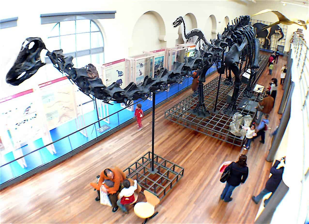 Museo Nacional de Ciencias Naturales - Los 5 mejores museos para visitar en Madrid.